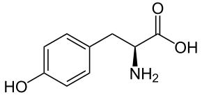L-Tyrosin: účinky, cena a kde v potravinách se nachází