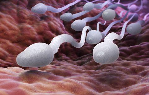 Tvorba spermii